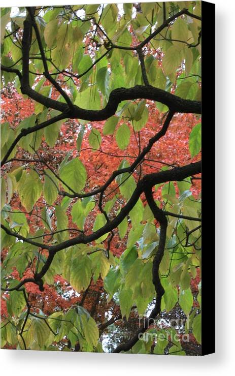 Fall Canvas Print featuring the photograph Autumn 7 by Carol Groenen