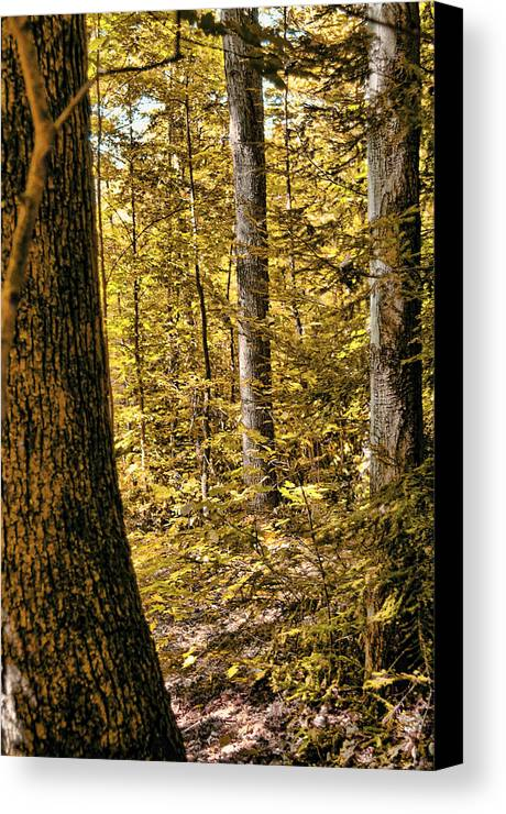 Fall Canvas Print featuring the photograph Autumn by Carol A Commins