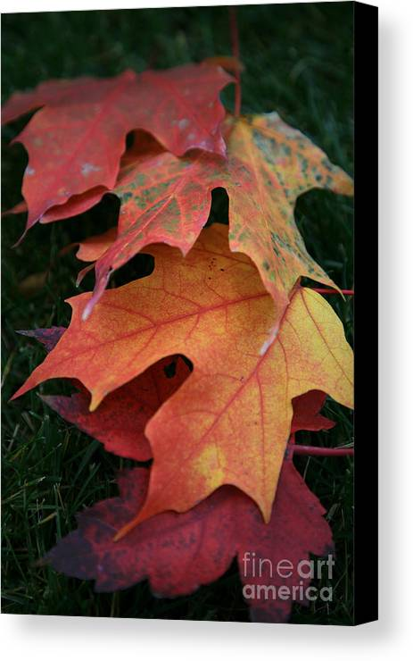 Autumn Canvas Print featuring the photograph Autumn Leaves by Timothy Johnson
