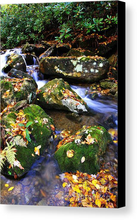 Rushing Mountain Stream Canvas Print featuring the photograph Autumn Monongahela National Forest by Thomas R Fletcher