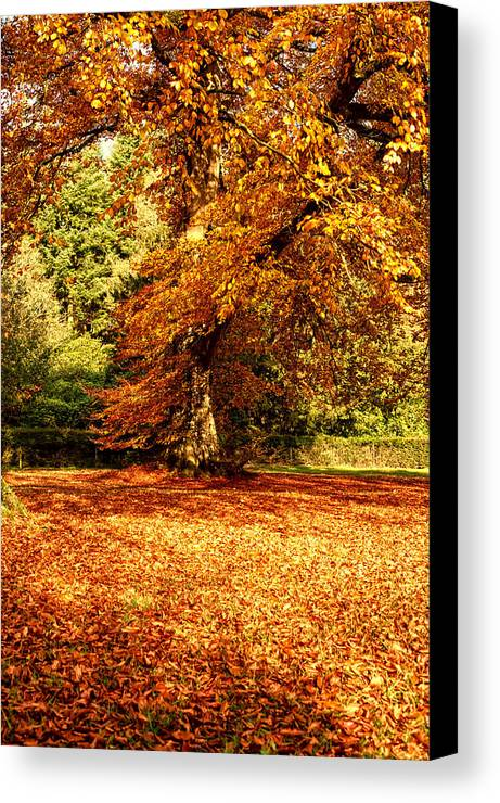 Blue Canvas Print featuring the photograph Autumn Scenery by Krzysztof Dac