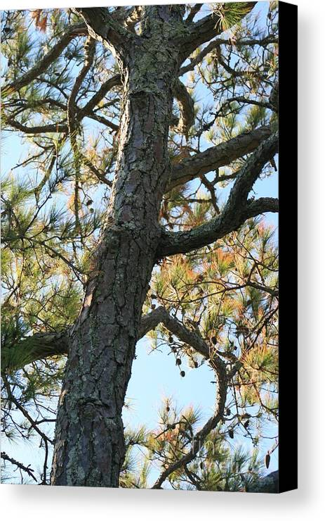 Tree Canvas Print featuring the photograph Bald Head Tree by Nadine Rippelmeyer