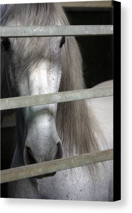 Photographer Canvas Print featuring the photograph Barred 2 by Jez C Self