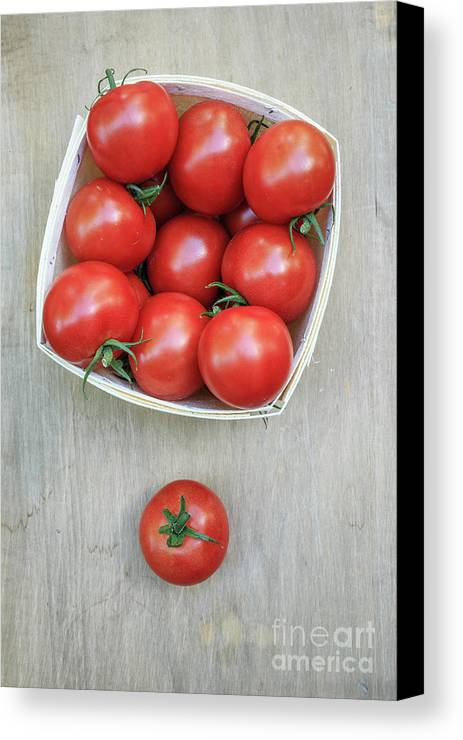Farm Canvas Print featuring the photograph Basket Of Fresh Red Tomatoes by Edward Fielding