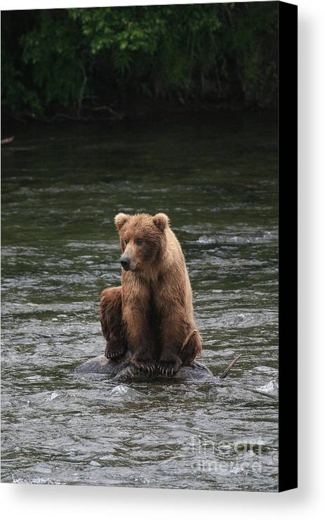 Photograph Of Bear Canvas Print featuring the photograph Bear Sitting On Water by Tracey Hunnewell