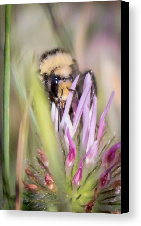 Canvas Print featuring the photograph Bee 3 by Reed Tim