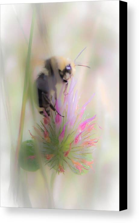 Canvas Print featuring the photograph Bee2 by Reed Tim