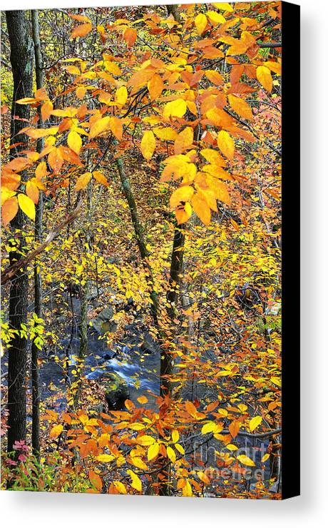 West Virginia Canvas Print featuring the photograph Beech Leaves Birch River by Thomas R Fletcher
