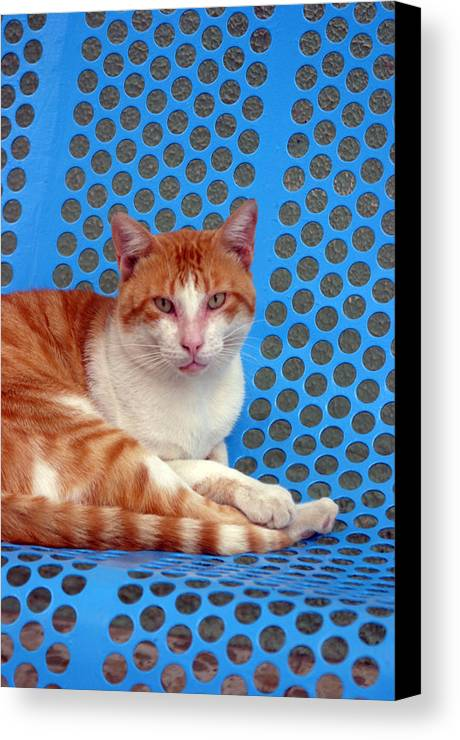 Photographer Canvas Print featuring the photograph Berja 10 by Jez C Self