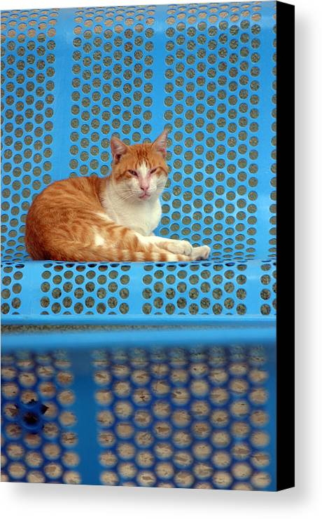 Photographer Canvas Print featuring the photograph Berja 9 by Jez C Self