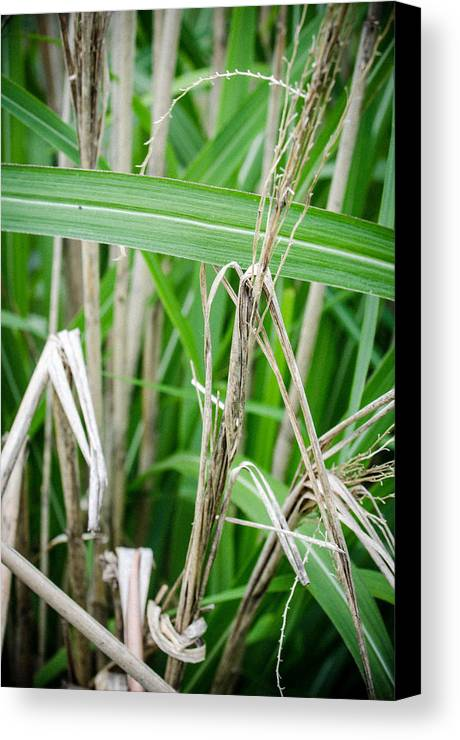 Green Canvas Print featuring the photograph Big Grass Blade by Amy Turner