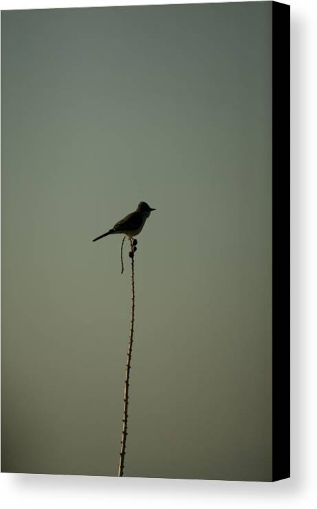 Terlingua Canvas Print featuring the photograph Bird On Lechuguilla by Clyde Replogle