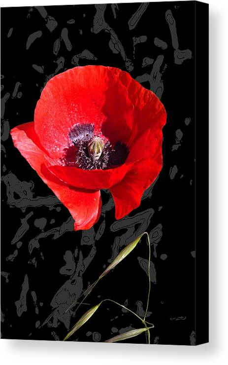 Poppy Canvas Print featuring the mixed media Black And Red Poppy by Martine Affre Eisenlohr