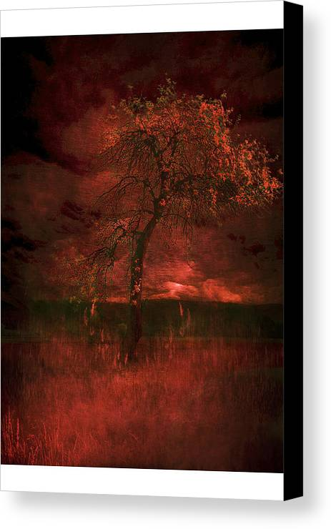 Canvas Print featuring the photograph Bloody Tree by Zygmunt Kozimor