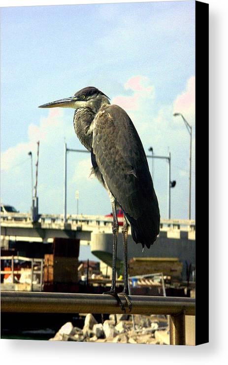 Bird Canvas Print featuring the photograph Blue Heron by Dean Corbin