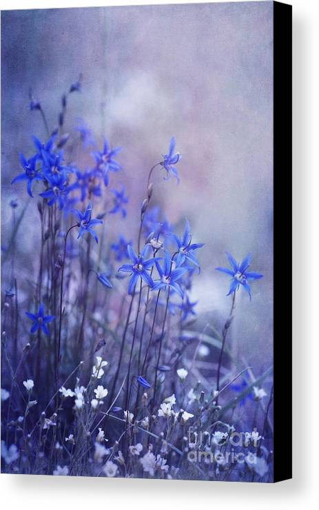 Yukon Bellflower Canvas Print featuring the photograph Bluebell Heaven by Priska Wettstein