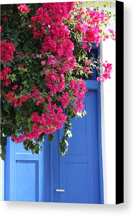 Bougainvillea Canvas Print featuring the photograph Bougainvillea And Blue by Yvonne Ayoub