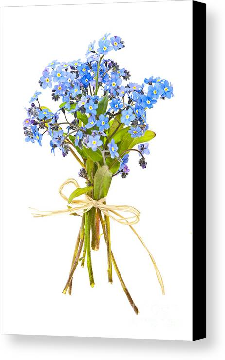 Bouquet Canvas Print featuring the photograph Bouquet Of Forget-me-nots by Elena Elisseeva