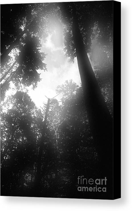 Trees Canvas Print featuring the digital art Breathing Trees by Sven Brogren