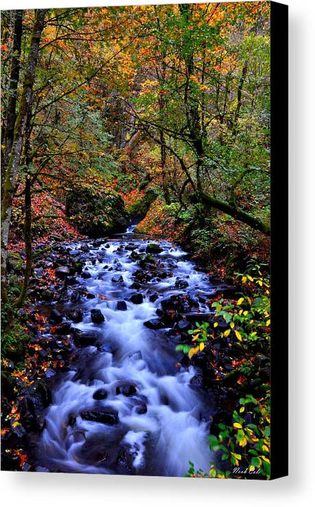 Stream Canvas Print featuring the photograph Bridal Veil Creek by Noah Cole