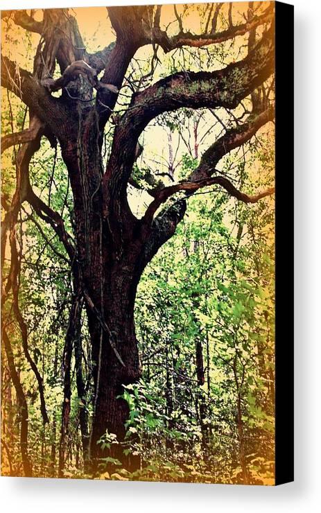 Tree Canvas Print featuring the photograph Broken Branch by Jill Tennison