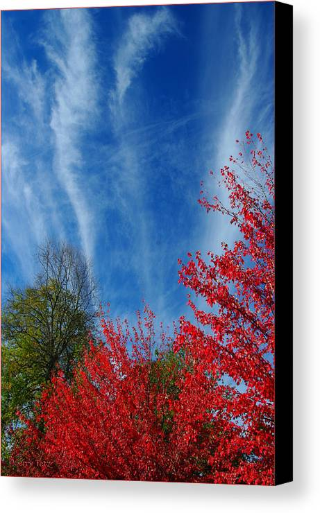 Autumn Canvas Print featuring the photograph Burst Of Color by Gerry Tetz