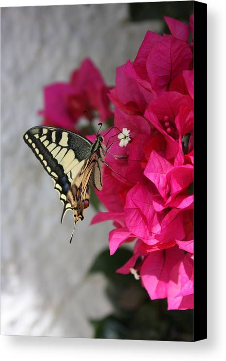 Butterfly Canvas Print featuring the photograph Butterfly 01 by Yvonne Ayoub
