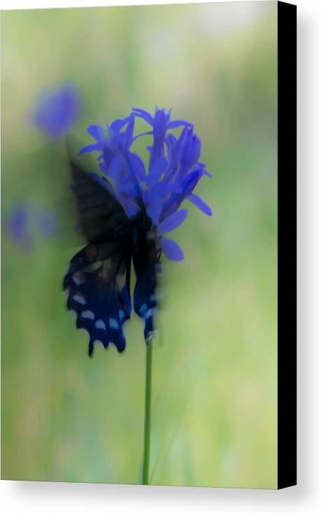 Canvas Print featuring the photograph Butterfly 5 by Reed Tim