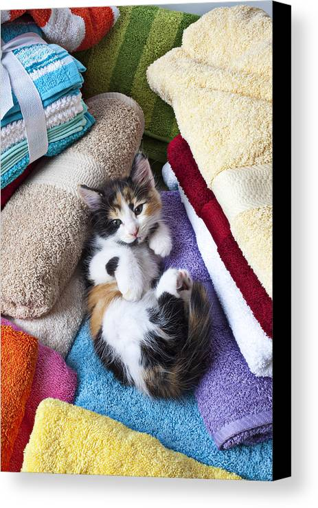 Calico Kitten Soft Towels Cat Canvas Print featuring the photograph Calico Kitten On Towels by Garry Gay