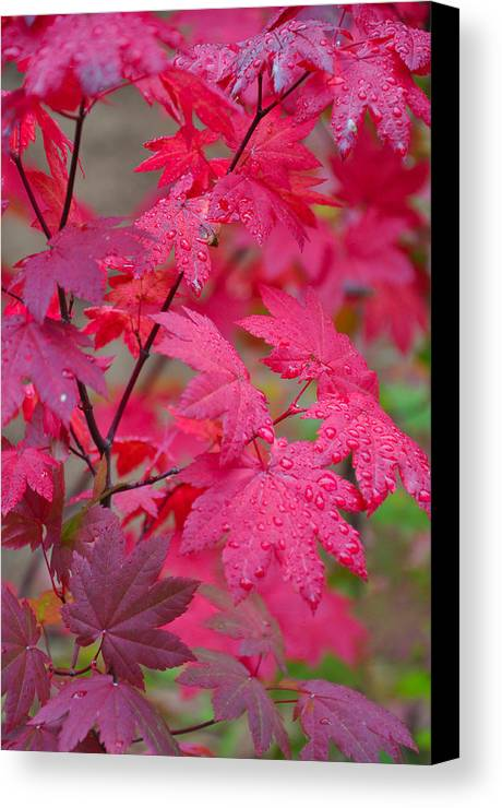 Autumn Canvas Print featuring the photograph Cascade Autumn Leafs 1 by Noah Cole