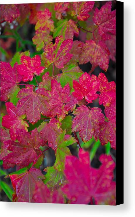Autumn Canvas Print featuring the photograph Cascade Autumn Leafs 7 by Noah Cole