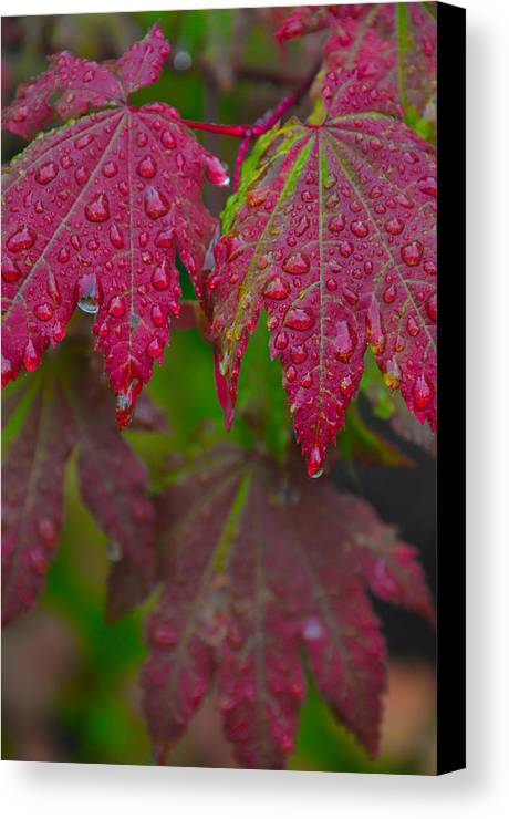 Autumn Canvas Print featuring the photograph Cascade Autumn Leafs 8 by Noah Cole