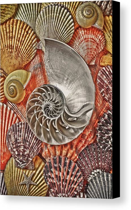 Chambered Nautilus Canvas Print featuring the photograph Chambered Nautilus Shell Abstract by Garry Gay
