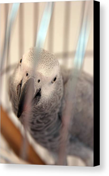 Photographer Canvas Print featuring the photograph Cherin by Jez C Self
