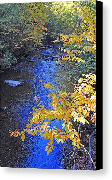 Cataloochee Creek Canvas Print featuring the photograph Color On Big Cataloochee Creek by Alan Lenk