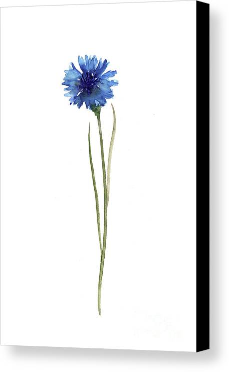 Art Canvas Print Featuring The Painting Cornflower Blue Botanical Illustration Knapweed Watercolor Floral