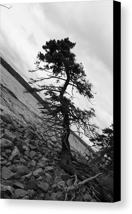 Tree Canvas Print featuring the photograph Crooked by Becca Brann
