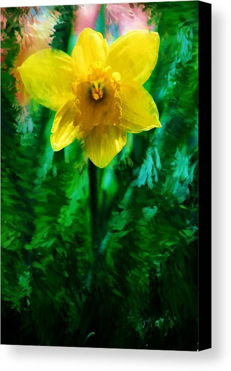 Abstract Canvas Print featuring the photograph Daffy Dill by David Lane
