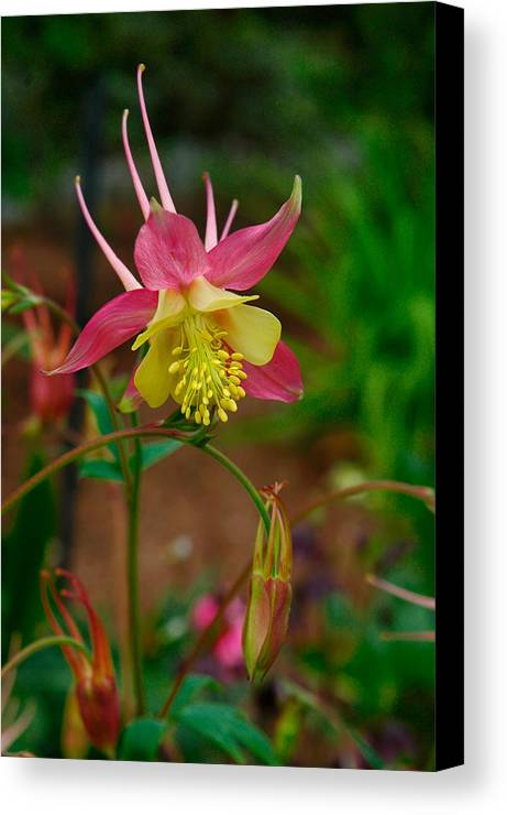 Flower Canvas Print featuring the photograph Dainty Flower by Amber Lea Starfire
