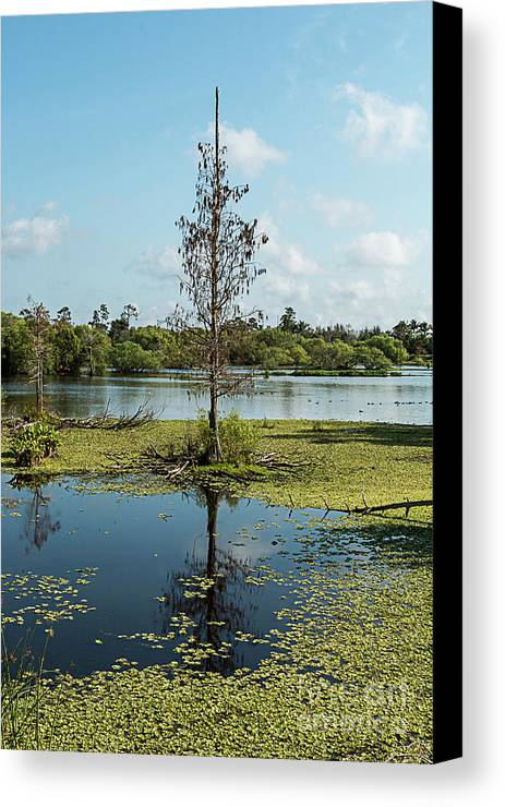 Tree Canvas Print featuring the photograph Death Within by Margie Hurwich