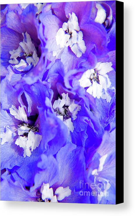 Nature Canvas Print featuring the photograph Delphinium Flowers by Julia Hiebaum