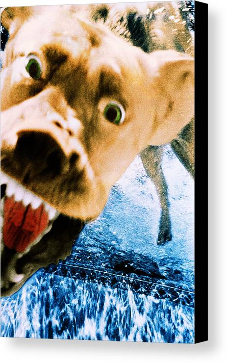 Dog Canvas Print featuring the photograph Devil Dog Underwater by Jill Reger