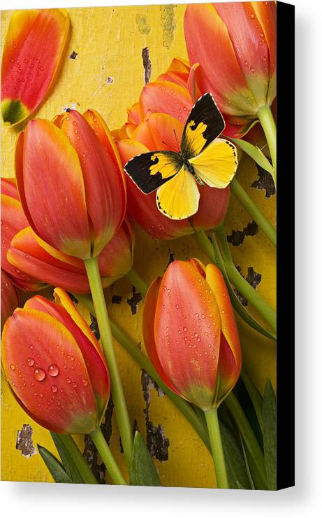 Butterfly Canvas Print featuring the photograph Dogface Butterfly And Tulips by Garry Gay