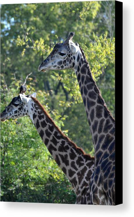Animals Canvas Print featuring the photograph Elegant Girls by Jan Amiss Photography