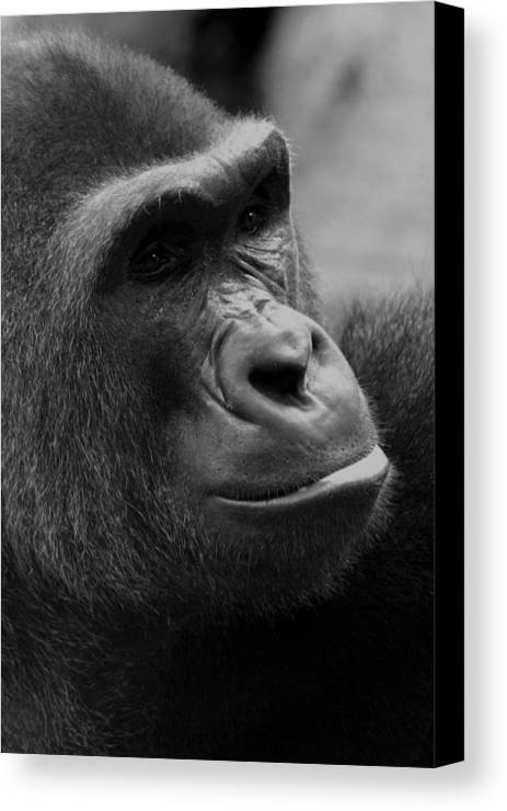 Africa Canvas Print featuring the photograph Everyones Friend by Alan Look