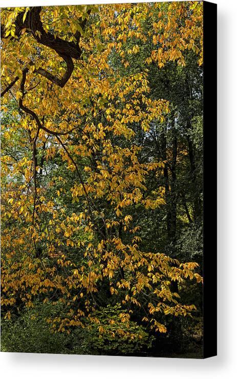 Fall Canvas Print featuring the photograph Fall 2010 12 by Robert Ullmann
