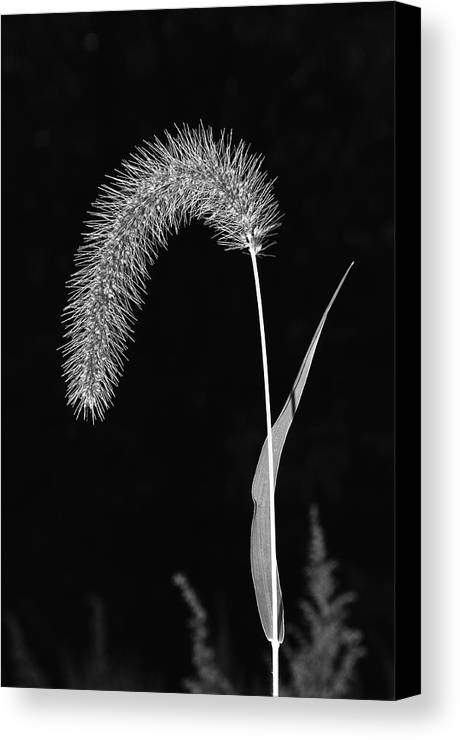 Grass Canvas Print featuring the photograph Fall Grass 1 by Mark Fuller