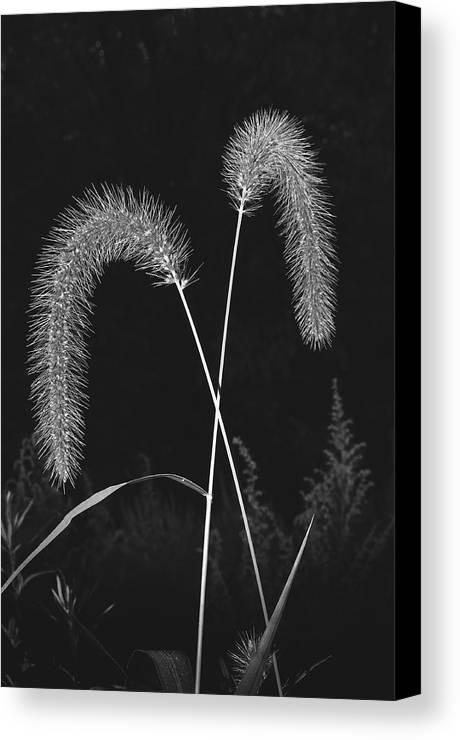 Grass Canvas Print featuring the photograph Fall Grass 2 by Mark Fuller