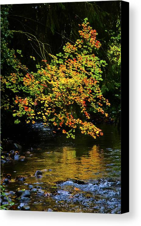 Fall Canvas Print featuring the photograph Fall Reflections by Jim Young