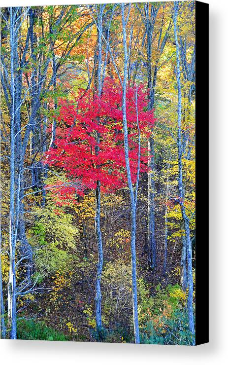 Fall Foliage Canvas Print featuring the photograph Fall's Flame by Alan Lenk